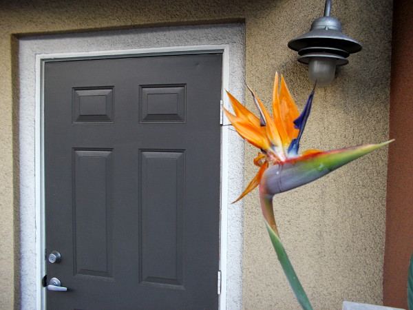 An eye-catching bird of paradise flower greets anyone who approaches this door!