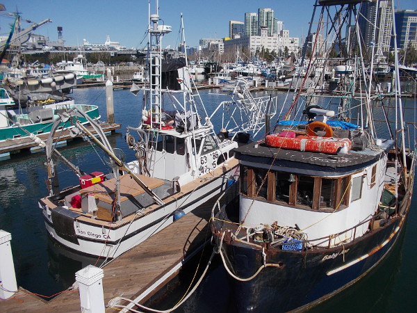 Today's commercial fishing fleet in San Diego includes picturesque boats that provide fresh seafood for restaurants and a Saturday dockside market.