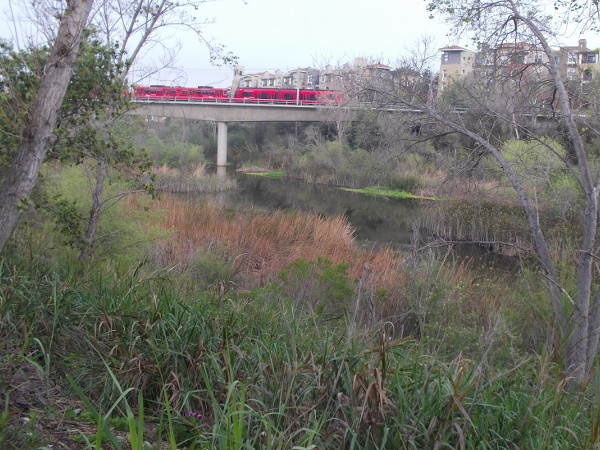 A red San Diego Trolley passes over the life-filled river as it approaches the Rio Vista station.