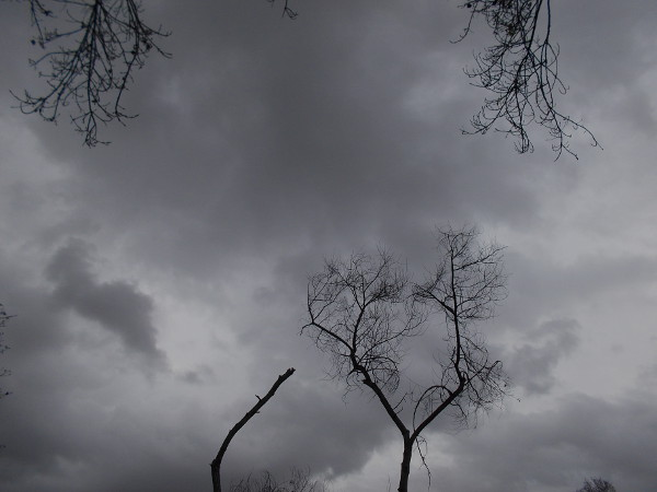 Dark clouds and barren Fremont Cottonwoods minutes before a winter storm brings brief torrential rain.