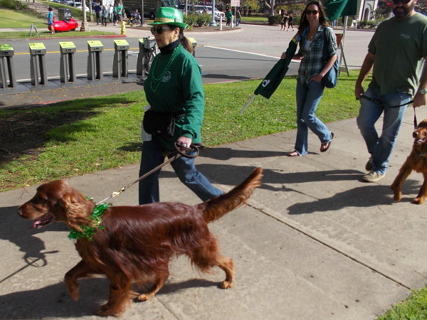 I saw lots of Irish Setters, of course.