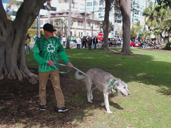 One of several large Irish Wolfhounds that were checking out the festivities.