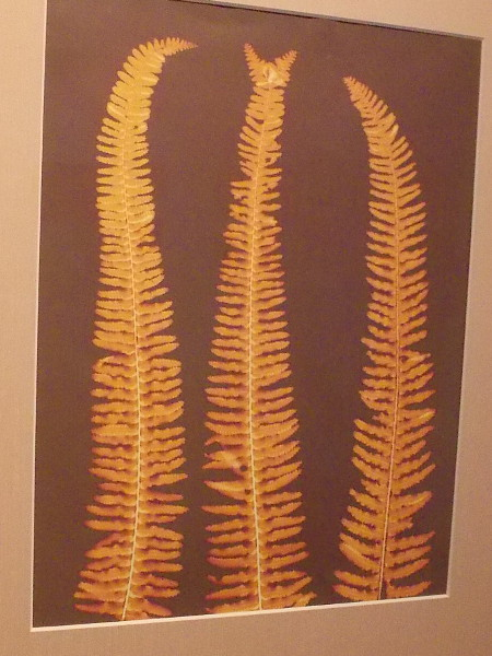 Uniquely beautiful Fern Lumen by artist Patricia Grabski.