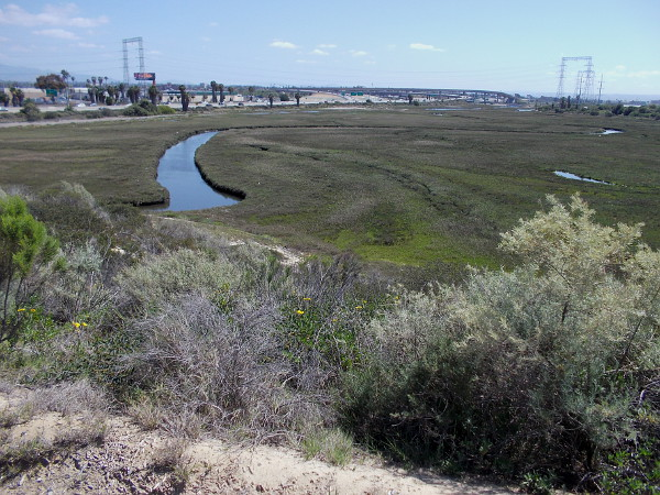 View of National City wetland from observation area south of the Best Western Marina Gateway hotel parking lot.