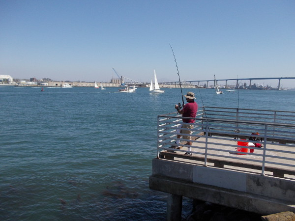 A fisherman caught something while I watched! Lots of sailboats out on blue San Diego Bay today.