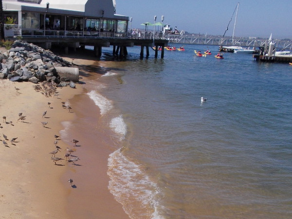 Shorebirds dot a little sandy beach just south of another fine Coronado restaurant, Peohe's.