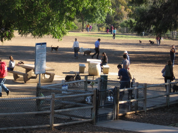 The very popular dog park at the west end of the Cabrillo Bridge on a typical, magical day.