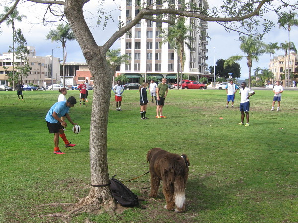People enjoy sports on the broad grassy area at the west edge of Balboa Park.