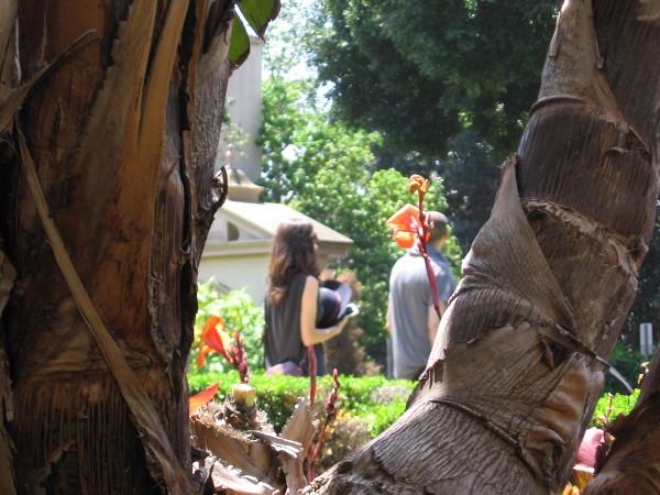 A couple enjoys a lovely day during a stroll through the Alcazar Garden.