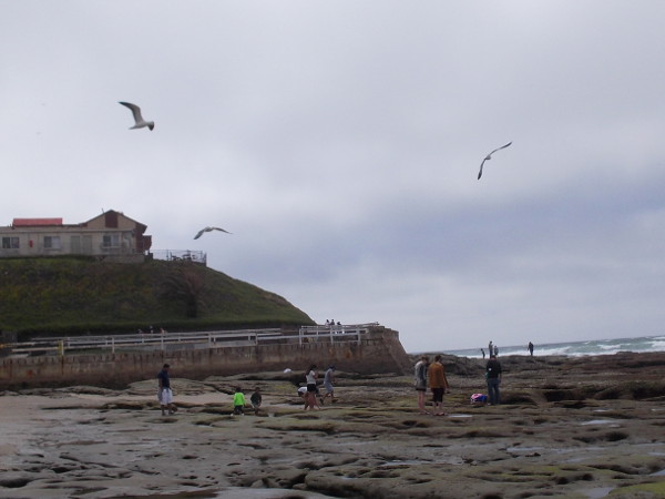 Seagulls circle above people who are searching for natural wonders in the intertidal zone.