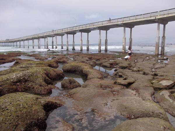 A view of the Ocean Beach Pier and nearby tide pools. An easily accessible place to explore the seashore and make small discoveries.
