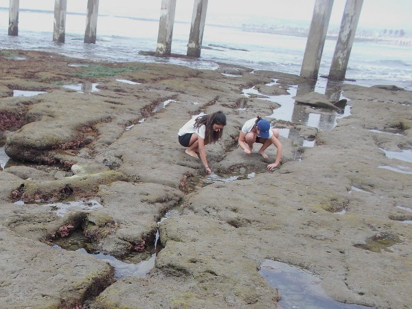 People explore fascinating tide pools near the foot of the OB pier during low tide. The rocks can be very slippery.