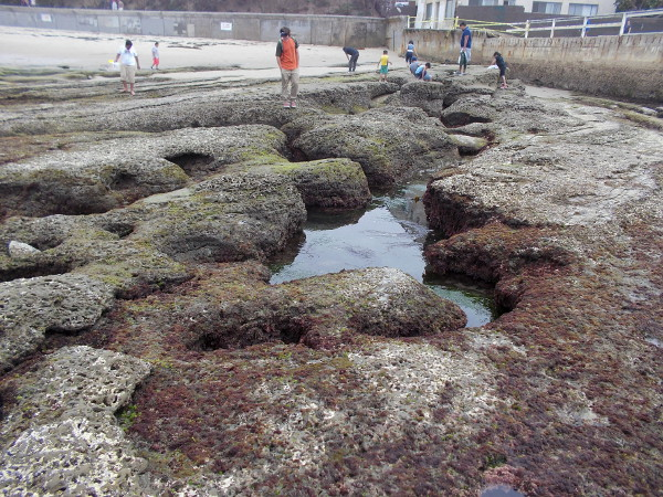 Another view of the tide pools immediately south of the OB pier.