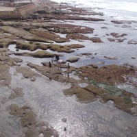 Amazing life and beauty in Ocean Beach tide pools.