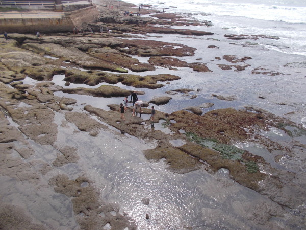 Looking down from atop Ocean Beach Pier at the nearby tide pools. People out on the rocks search for wonders in the intertidal zone.