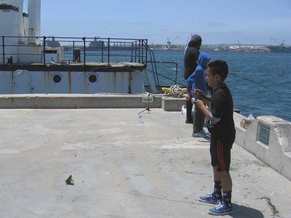 Some folks out fishing from the Tuna Harbor pier were catching a few spotted seabass! This one was too small and was quickly returned to San Diego Bay.