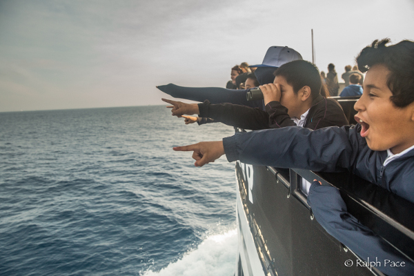 Thanks to Ocean Connectors, local school students can learn about marine wildlife during a whale watching tour off the San Diego coast. Image courtesy of Ocean Connectors. Photograph by Ralph Pace.