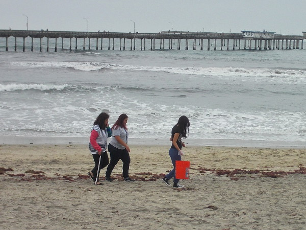 Volunteers search the beach near the OB pier for litter during a cleanup day.