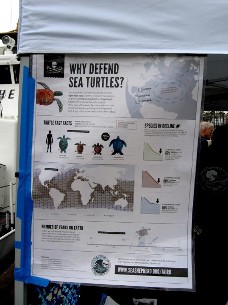 A detailed poster explains why sea turtles should be defended. Click to enlarge. San Diego's South Bay has its own small group of migratory green sea turtles.