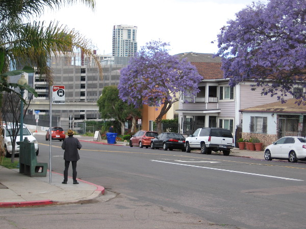 Looking back west toward downtown. Many jacaranda trees line San Diego's streets. A man waits at a bus stop.