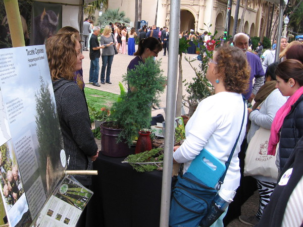 Visitors at the San Diego Zoo Centennial Festival in Balboa Park learn how rare, threatened and endangered native plants are being saved by the zoo.