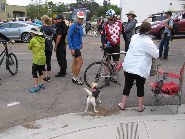 A dog came out to view the action!