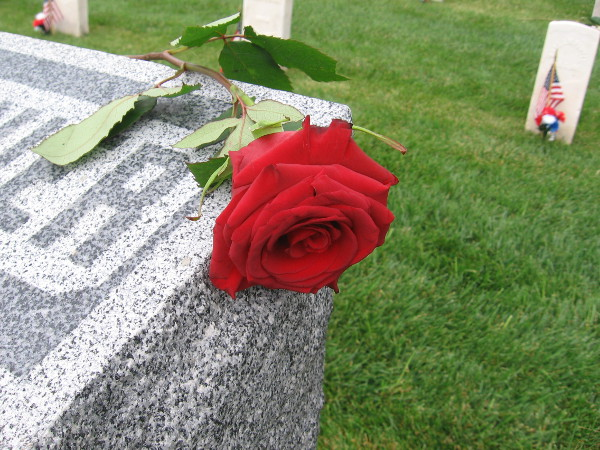 A Memorial Day rose adorns a solemn grave marker at Fort Rosecrans National Cemetery.