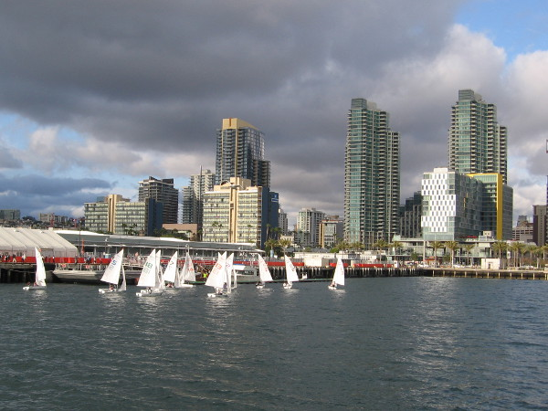 The leading sailboats approach San Diego's Cruise Ship Terminal, as gleaming skyscrapers rise in the background.