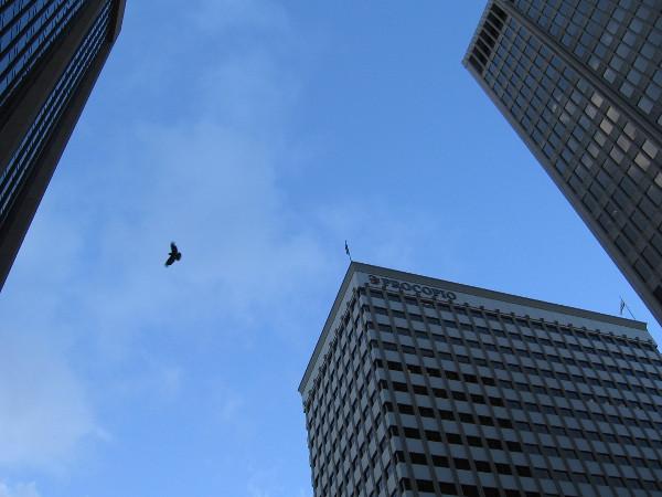 A bird flies between skyscrapers.