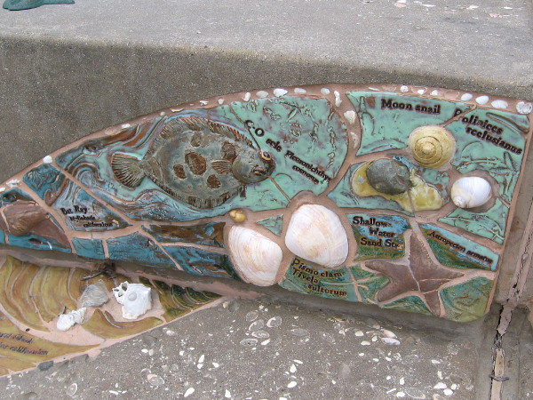 Many small sea creatures appear in amazing tile artwork in Solana Beach's Fletcher Cove Park.