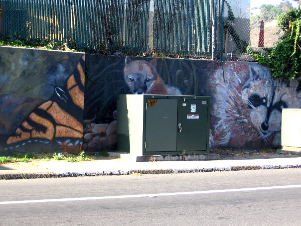 A butterfly, a fox (peeking from behind a transformer box on Camino de la Reina) and a raccoon.