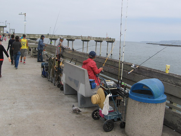 Generations of San Diegans have been fishing here for half a century. I wonder . . . how many fish have been caught over the years?