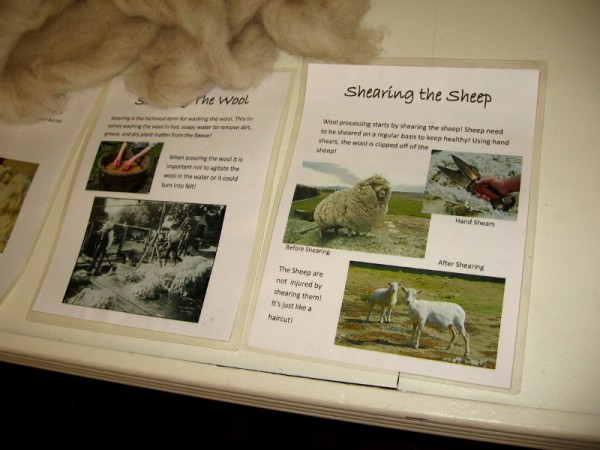 One display explains shearing sheep for wool, then carding, combing, and spinning wool.