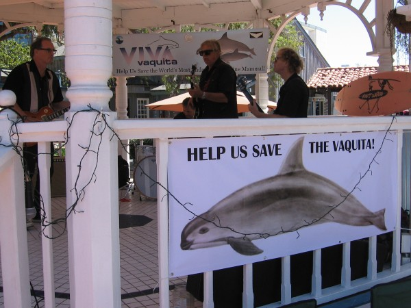 Help us Save the Vaquita display at the east gazebo of Seaport Village in San Diego. The band Insect Surfers was providing some music!