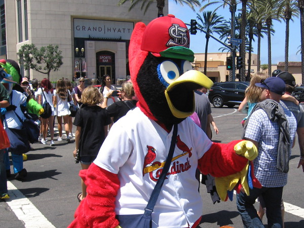 Fredbird of the St. Louis Cardinals heads across Harbor Drive from the Manchester Grand Hyatt.