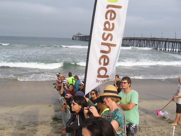 A line of people awaits the start of the Unleashed by Petco Surf Dog Competition's first 10-minute heat of the day!