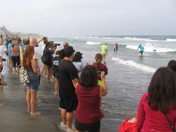 The crowd watches these talented canine athletes as they take to the thundering waves!