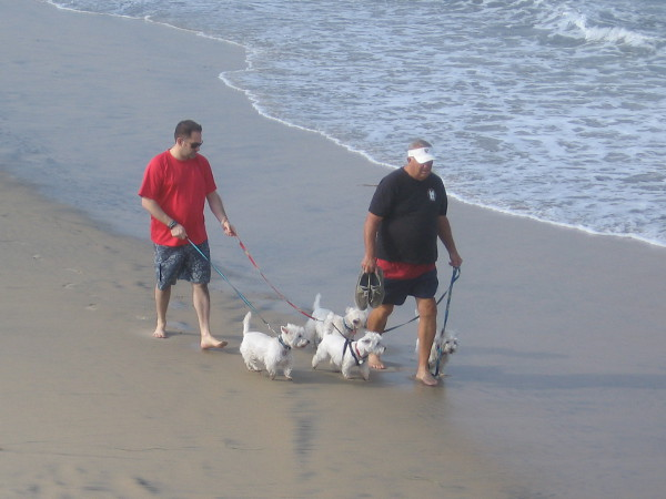 These best buddy pals are happy just to walk along the beach. No need to show off surfing skills.