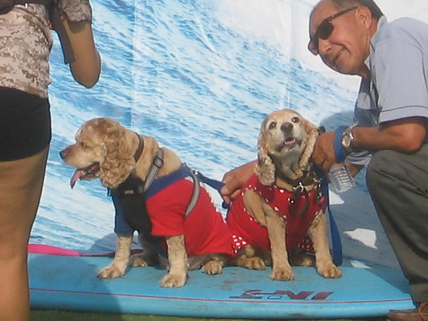 And these two sneaky dogs want to pretend they're honest-to-goodness surfers. Can't fool me!