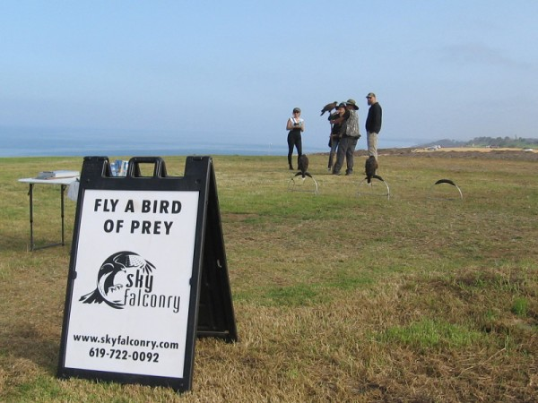 While I wandered about I made a cool discovery! Atop the hill beside the Torrey Pines Gliderport, the folks of Sky Falconry were getting ready for a morning class.