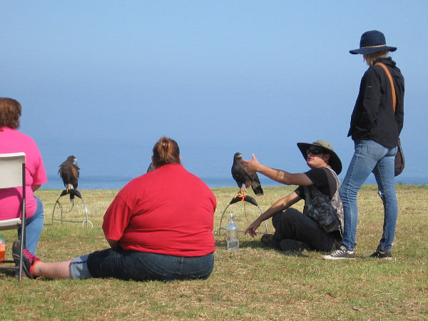 The Sky Falconry class has begun and I take another photo, then leave these good people in peace. There is much else to see...
