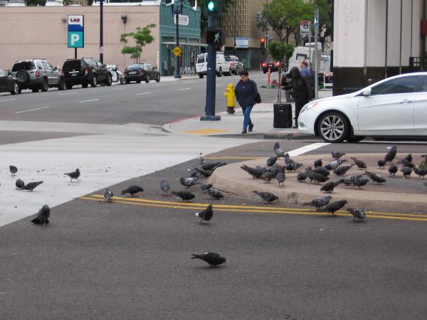 Pigeons on Broadway.