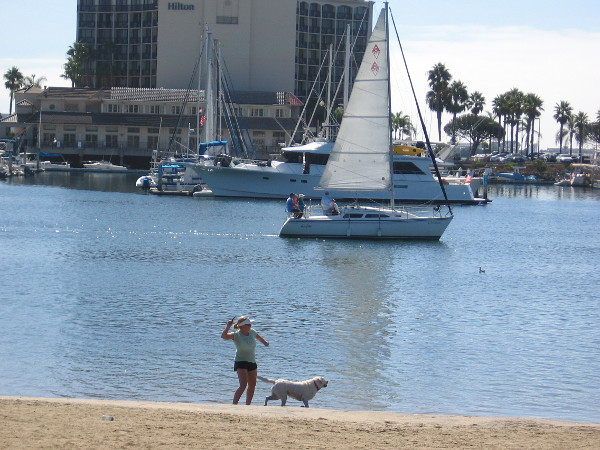 Playing catch with a dog on the small beach at Spanish Landing Park. A sailboat moves through Harbor Island's West Basin, heading out to San Diego Bay.