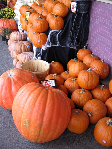 Pumpkins, pumpkins everywhere! Big ones and little ones! It must be October.