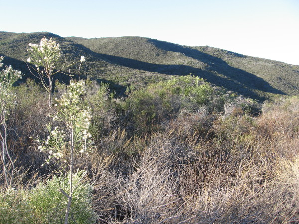 Looking southeast toward a chaparral-covered slope of Black Mountain in north San Diego County.