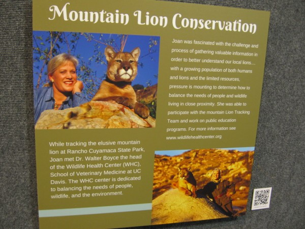 Joan Embery participated on a mountain lion tracking team at Rancho Cuyamaca State Park east of San Diego.