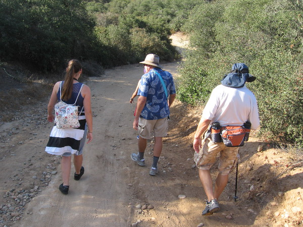 Our small group of hikers heads down into the canyon through Coastal Sage Scrub habitat. We are passing California scrub oaks.
