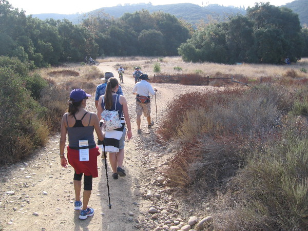 Approaching the central part of the long, narrow canyon, which runs from Poway west to the Pacific Ocean. Peñasquitos Creek lies beyond those coast live oaks in the distance.