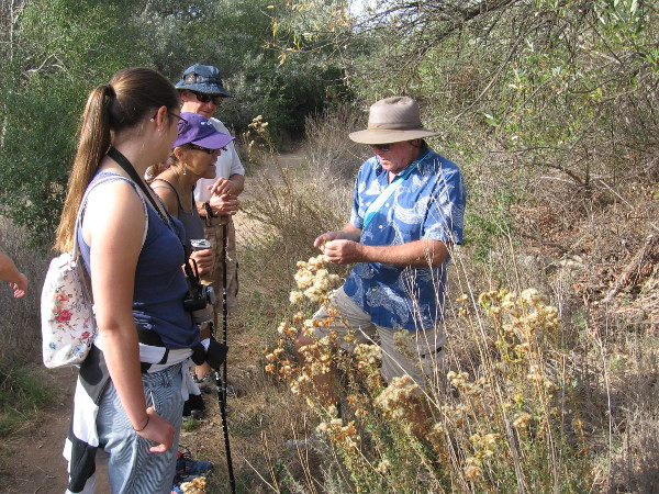 Mike Kelly is a guide and activist whose knowledge of Peñasquitos is deep. Here he shows us some poison oak which is growing a short distance off the trail.