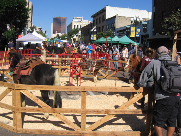 Horse rides in San Diego's Gaslamp Quarter. One of many fun attractions at the Fall Back Festival and Historic Children's Street Faire.